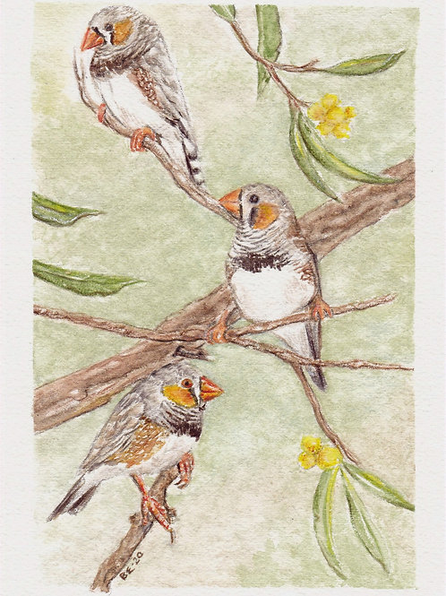 Finches - Greeting Card Set