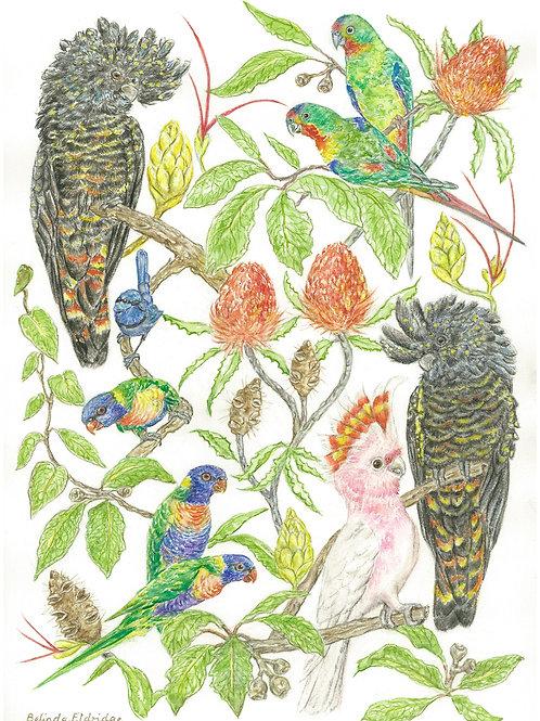 Australian Birds - A3 Fine Art Print