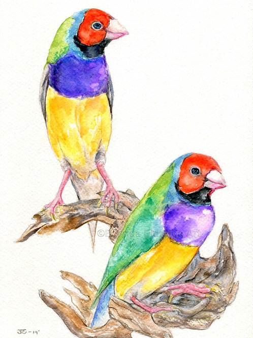 Gouldian Finches Original watercolour