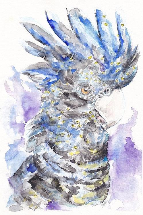 Black Cockatoo Blue Original Watercolour