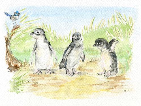 Fairy Penguins Print