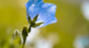 flower-1512646_1920.jpg