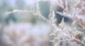 vinter13.JPG