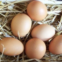 les œufs/abats