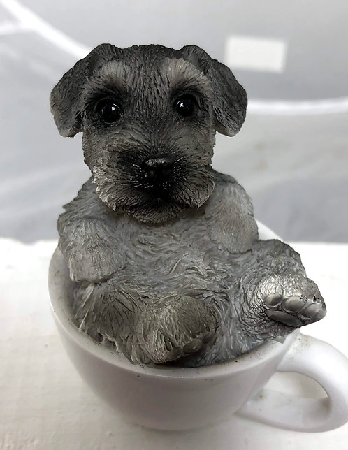 Small Schnauzer in a Tea Cup