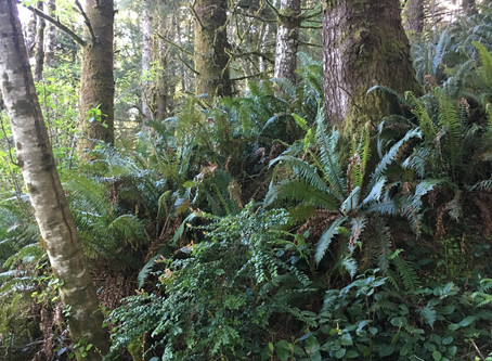 The importance of Mycorrhiza Fungi