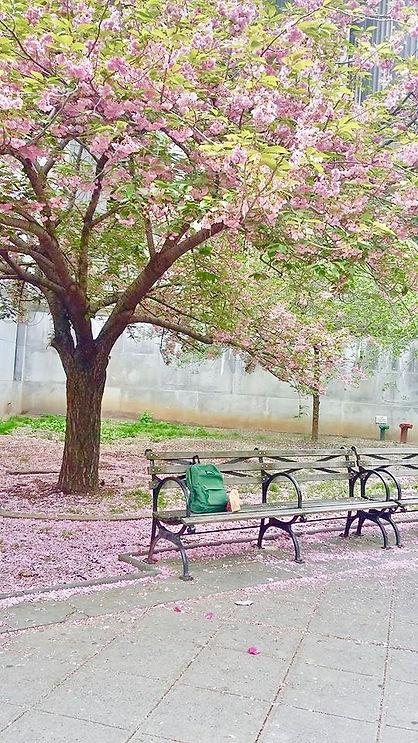 PIX Cherry Tree by Court NYC (1).jpg