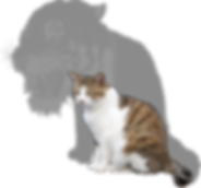 Chat avec l'ombre d'un tigre