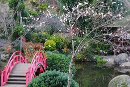 paysage japonais - pont et cerisier