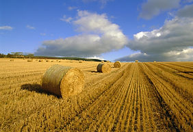 hay_bales_agriculture_summer_4890_1920x1