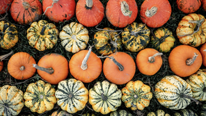 How to Keep Pumpkin Decor Fresh