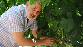 Bob Pepi Seeks to Help Others Trying to Make it in the Wine World