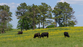Changes in Beef Industry Go Beyond the Numbers