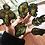 Thumbnail: COSMIC CREATURES STICKER SHEET