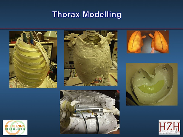 thorax model.png