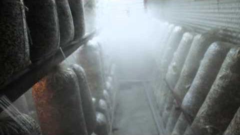 Система тумана