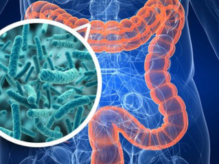 Importância de uma microbiota saudável no emagrecimento.