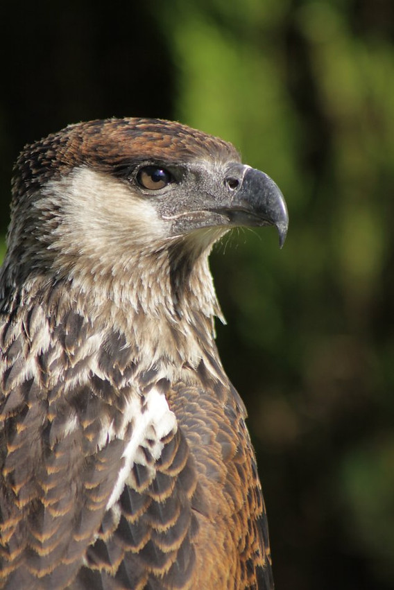 The Raptor Centre Birds Of Prey Kent