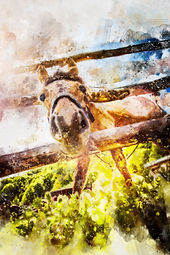 funny-horse-through-fence-in-watercolor.