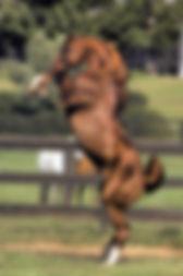 rearing-horse-original-1500px.jpg