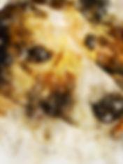 dog-2-in-watercolor.jpg
