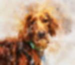 irish-setter-in-watercolor.jpg