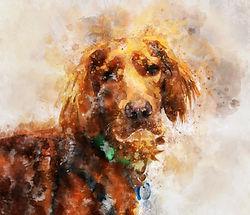 irish-setter-in-watercolor.jpg