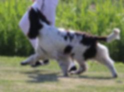 Ciro juoksee 19.jpg
