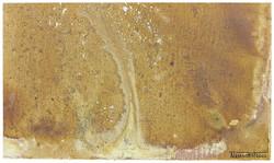 Sustrato rocoso 1