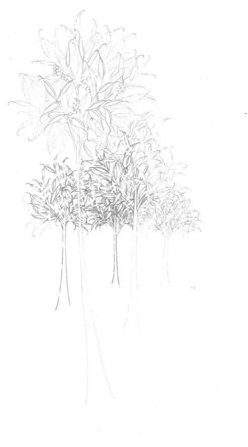 Desiertos Ajardinados IV