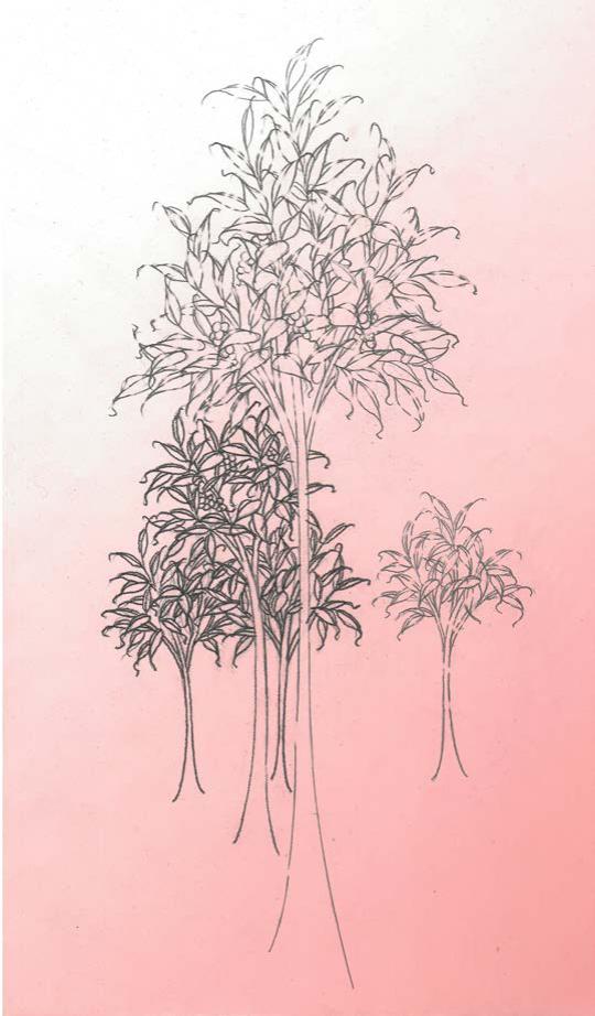 Desiertos Ajardinados. 2