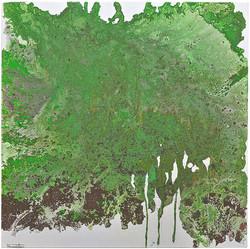 Algas clorofíceas