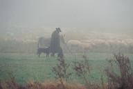 Shepherd, Germany