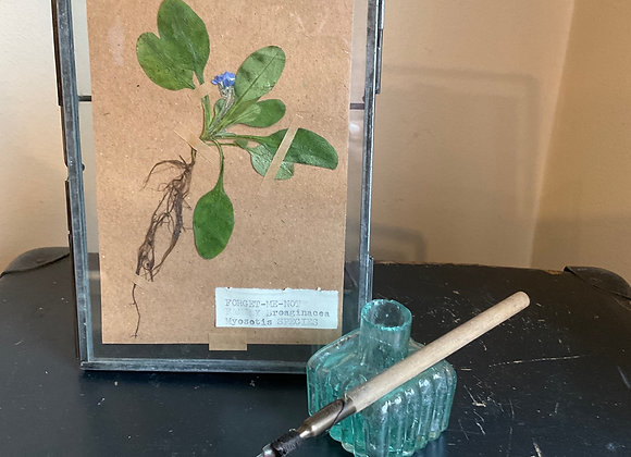 Forgot-me-not Herbarium
