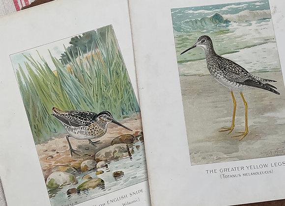 Fish & Bird Print Folder