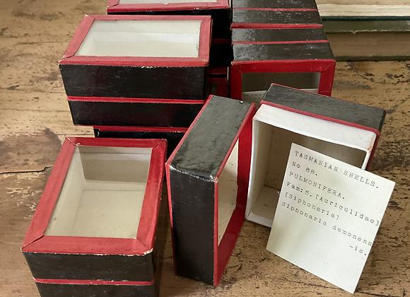 Victorian Specimen Box