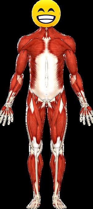 Anatomy%252520front_edited_edited_edited