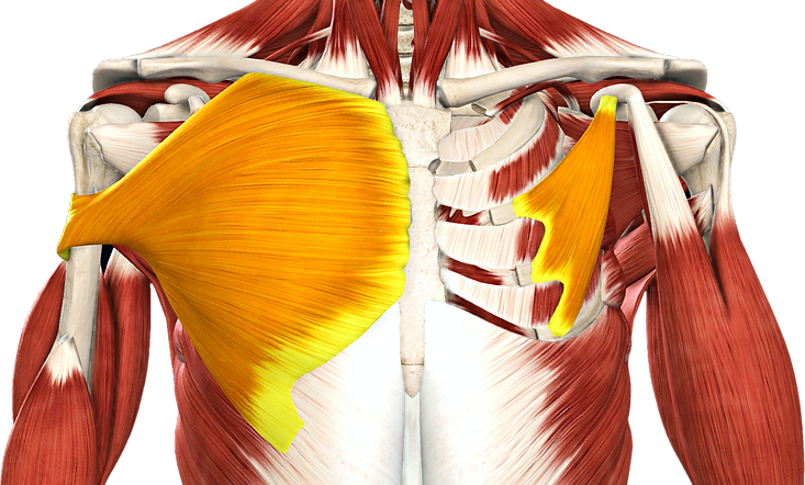 Chest collage2-cutout.png