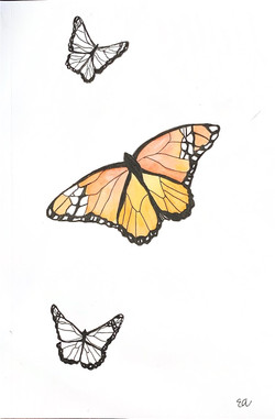 Butterfly Ink & Wash