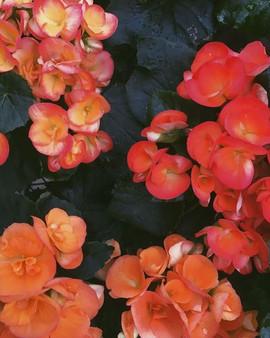 Do I like flowers___Trick question_ I lo