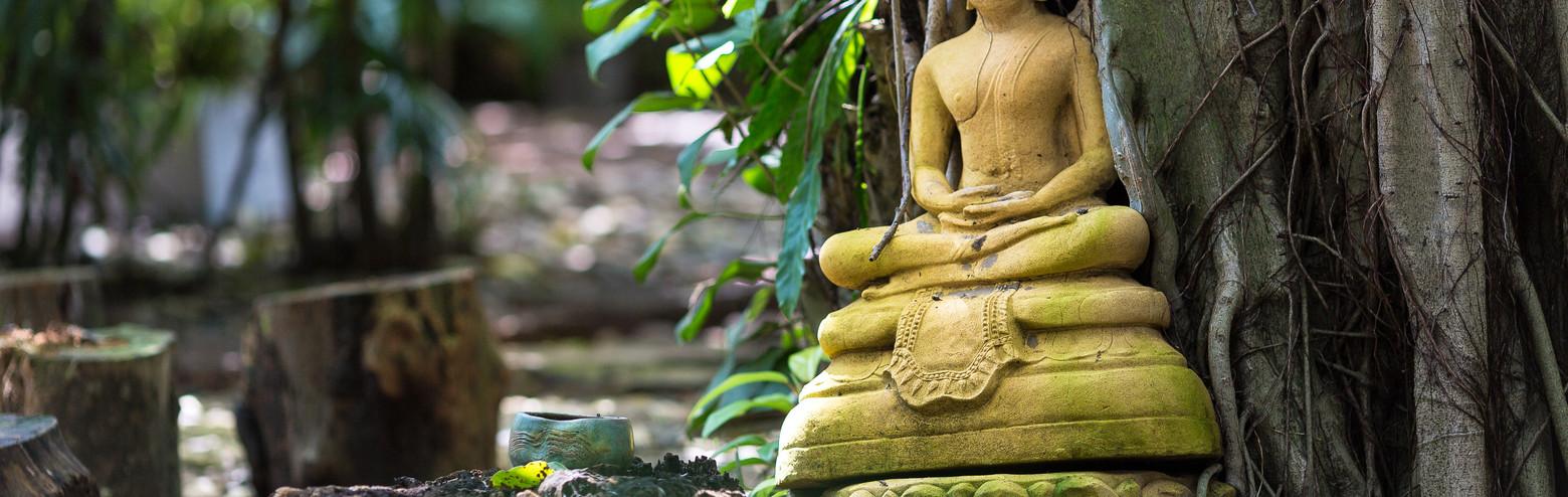 Garden-Bodhi.jpg