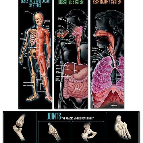 Human Body Mini Bulletin Board