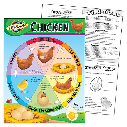 Life Cycle of a Chicken Chart