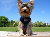 Puppy training in Cambridge