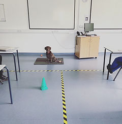 Cambridge Puppy Training.jpg
