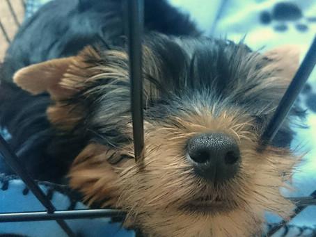 Stress in puppies | Cambridge Puppy Training