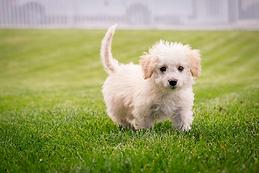 puppy.webp