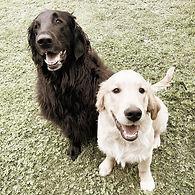 Cambridge Puppy Training 2.jpg