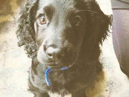 Training sessions - duration   Cambridge Puppy Training