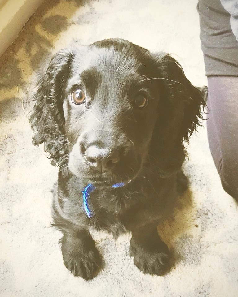 Cambridge Puppy Training
